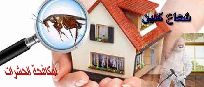 الاولى فى مكافحة الحشرات ورش مبيدات