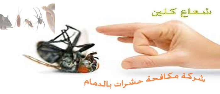 من افضل شركات مكافحة حشرات